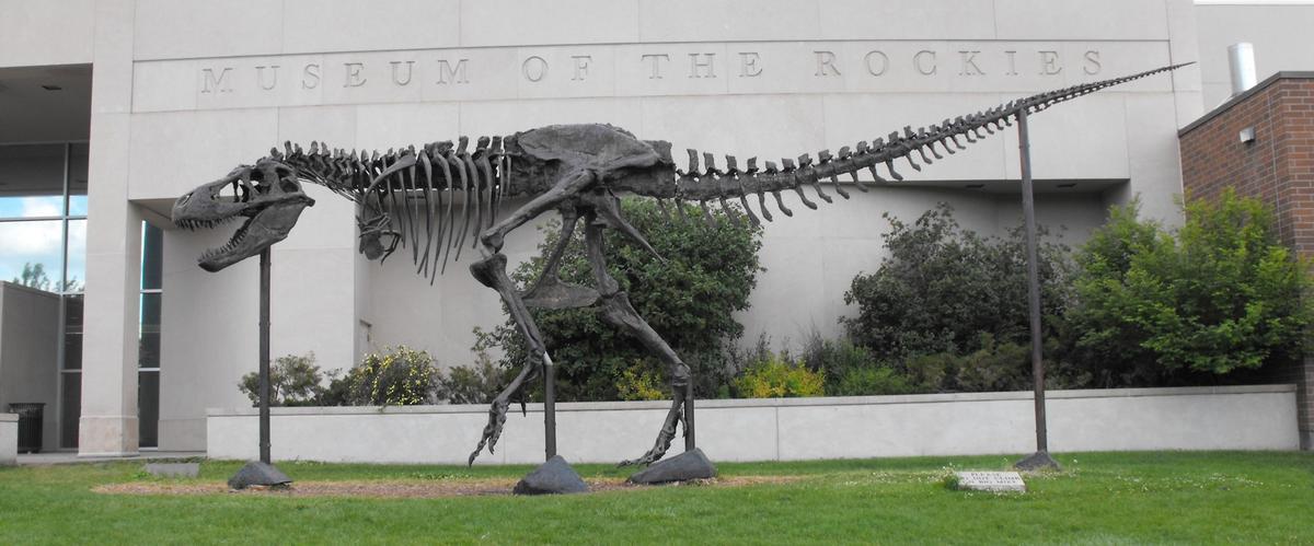 MOR rex