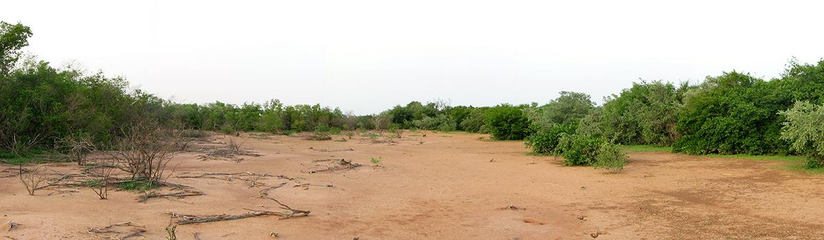 Open soil area