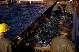 Workers managing a salmon run at the Bonneville Dam, Washington.