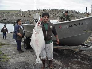 St. George Island, Pribilof Islands, AK - Fisherman with Halibut.