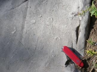 Brachiopods in Madison Limestone