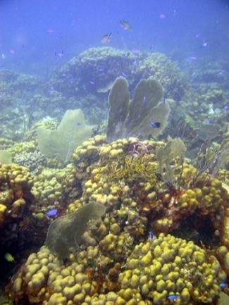 Modern Coral Reef