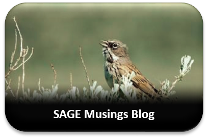 SAGE Musings Button
