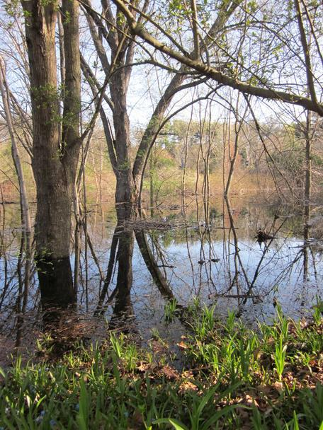 Spring flood