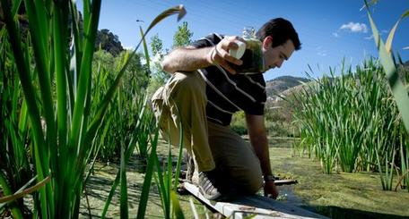 Algae prospecting NREL