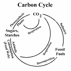 Teaching the carbon cycle with a consideration of chemosynthesis femo ccuart Choice Image