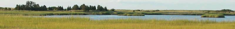 Salt Marsh Banner