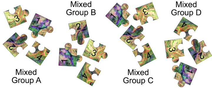 graphic of jigsaw mixed groups