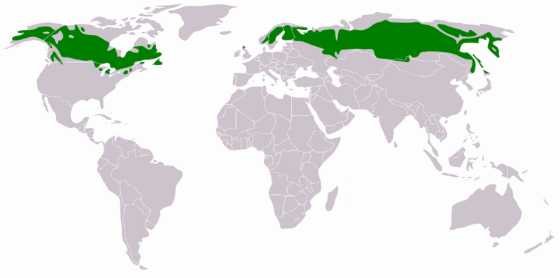 boreal forest distribution