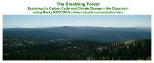 Rocky RACCOON Breathing Forest