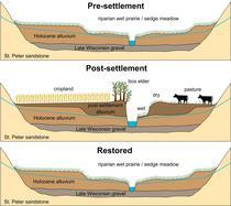 Fig. 2. Conceptual Model of Floodplain Change