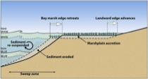 Tidal Marsh Geomorphic Processes