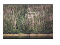 A hillslope with cedar decline