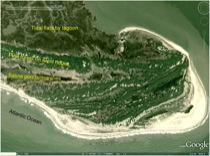 Image of the north end of Hog Island, an area of historic accretion.
