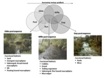 Figure 3: Relationships between physical biotopes and biologically functional habitat features at the mesoscale of river systems.